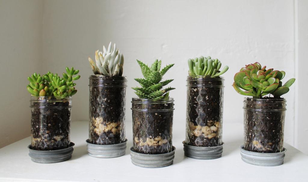 Mason Jar Succulent Plant